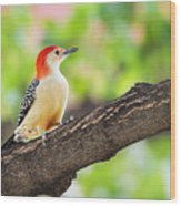 Male Red-bellied Woodpecker Wood Print