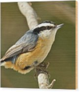 Male Red Breasted Nuthatch 2151 Wood Print