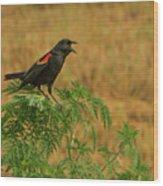 Male Red-winged Blackbird Singing Wood Print