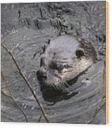 Male River Otter Wood Print