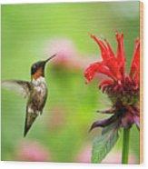 Male Ruby-throated Hummingbird Hovering Near Flowers Wood Print