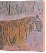 Adult Male Tiger Of India Striding At Sunset  Wood Print