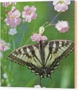 Male Tiger Swallowtail 5416 Wood Print