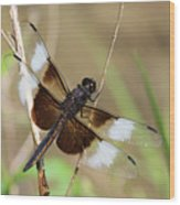 Male Widow Skimmer Dragonfly #3 Wood Print