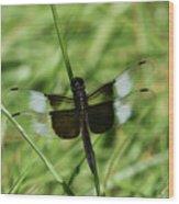 Male Widow Skimmer Dragonfly #4 Wood Print