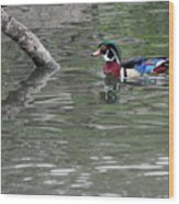 Drake Wood Duck On Pond Wood Print