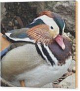 Male Wood-duck Wood Print