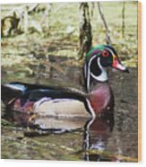 Male Wood Duck Wakulla River Wood Print
