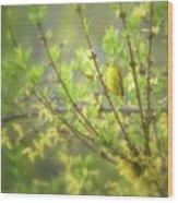 Male Yellow Warbler Wood Print