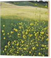 Malibu Creek Wildflowers Wood Print