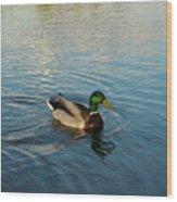 Mallarad Duck 1 Wood Print