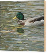 Mallard Among The Fallen Leaves Wood Print