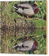 Mallard And Reflection Wood Print