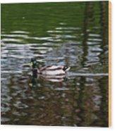 Mallard Wood Print