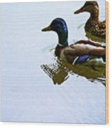 Mallard Couple Wood Print
