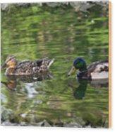 Mallard Couple On A Pond Wood Print