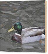 Mallard Drake Duck Wood Print