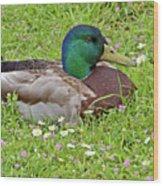 Mallard Drake In The Grass Wood Print