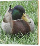 Mallard Duck #2 Wood Print
