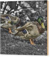 Mallard Duck A4 Wood Print