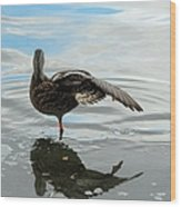 Mallard Duck Hen Stretching Wing Wood Print
