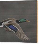 Mallard Duck in Flight Artsy2 Wood Print