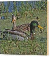 Mallard Duck Pair Wood Print