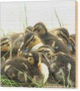Mallard Ducklings Wood Print