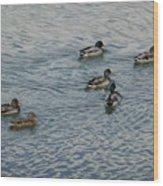 Mallard Ducks In Pond 2 Wood Print