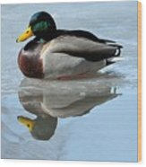 Mallard Duck Drake On Ice II Wood Print