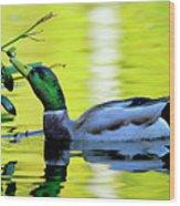 Mallard Eating Seed Pod 2 Wood Print