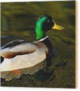 Mallard Green Wood Print