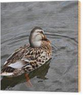 Mallard Hen 20130924_309 Wood Print
