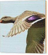Mallard In Flight . 40d5450 Wood Print