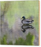 Mallard In Mountain Water Wood Print