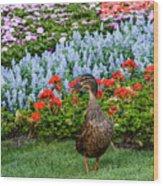 Mallard In The Garden Wood Print
