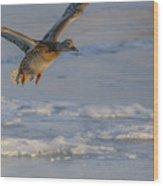 Mallard Landing Over Ice Wood Print