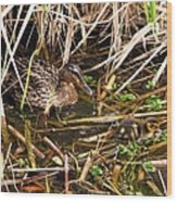 Mallard Mama With Duckling Wood Print