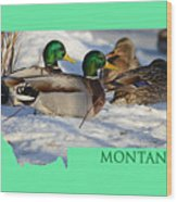 Mallard Montana Wood Print