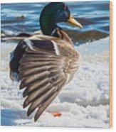 Mallard On Ice Wood Print