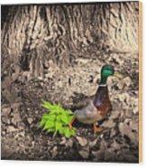 Mallard On The Run Wood Print