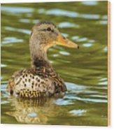 Mallard Or Wild Duck - Anas Platyrhynchos Wood Print