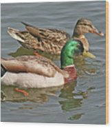 Mallard Pair Swimming, Waterfowl, Ducks Wood Print