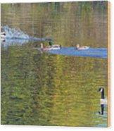 Mallard Splash Landing Wood Print