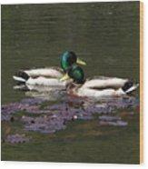 Mallards Amoung The Lilies Wood Print