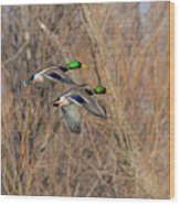 Mallard's In Flight Wood Print