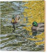 Mallards On Golden Pond 3 Wood Print