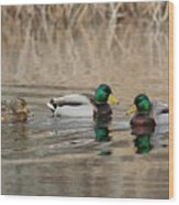 Mallards On The Pond Wood Print
