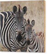 Mama And Baby Zebra Wood Print