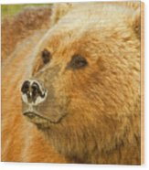 Mama Bear Close Up Wood Print